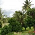 pedaço do paraiso IV (Bahia-sertão)