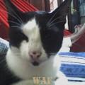 Meu gato - rhumrhum