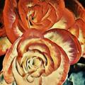 Begonias doradas