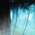 Un bosque iluminado