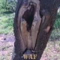 formas que a natureza esculpe..