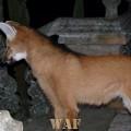 Lobo guará no Santuário do Caraça