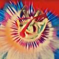 Suavidad en flor