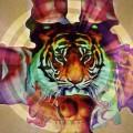 Tigre especial