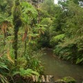 Waitakere Ranges - New Zealand