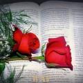 O Amor e a Morte são Amantes...