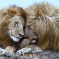 Wild lovers...