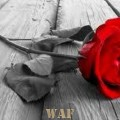 Rose to you my love...