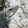 El sorriso do Lagarto - Yucatan