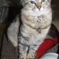 Miucha, a gata capixaba