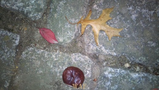Naturezas Mortas(9) - © Rui Lima - PARTE 1