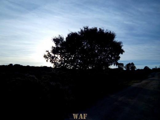 Anochece en Valdelacasa