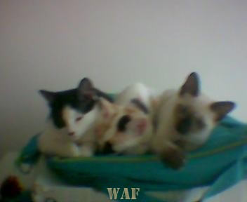 As minhas amigas... Gatinhas