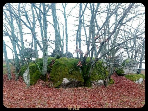 El musgo y la piedra. Valdelacasa, Salamanca.