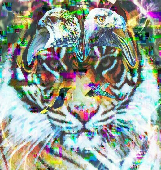 Observación felina