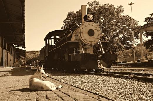 Feliz com o chegar do Trem