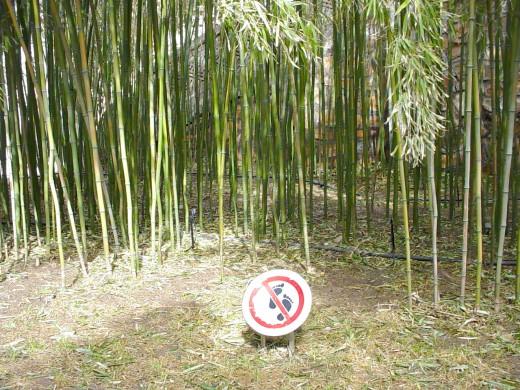 "a sign at the bamboo trees saying ""don't walk through the bamboo"" at the Summer Palace (Beijing, China)"